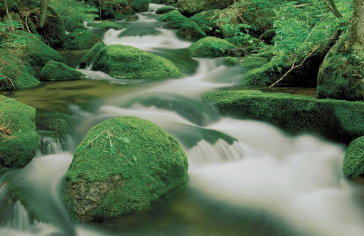 moss-rocks-park-Quebec - Moss-covered rocks in a stream in Parc national du Mont-Megantic, Quebec, Canada.