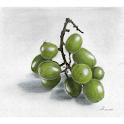 ArtToDraw 0002 Grapes icon