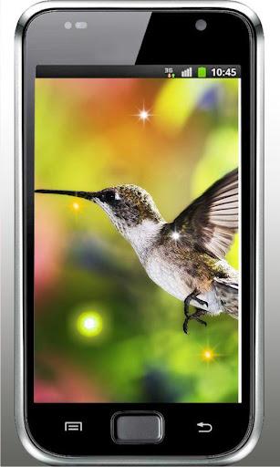 Colibri Sounds live wallpaper
