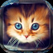 App Cute Cats Live Wallpaper APK for Windows Phone