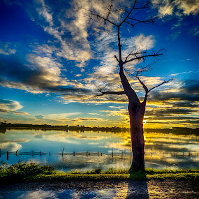 lonely by Dugalan Poto - Nature Up Close Trees & Bushes ( clouds, reflection, shadows, central java, blue sky, sky, tree, sunset, shadow, indonesia, dugalan, trees, cloud, pond, tegal )