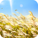 Natural Reed Live Wallpaper icon