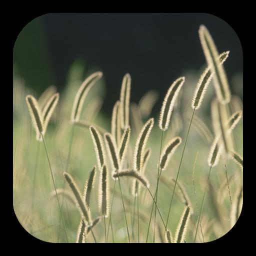 zz[Unpublish]Bristle Grass LOGO-APP點子