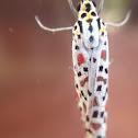 Salt & Pepper Moth