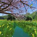 Stream Sakura icon