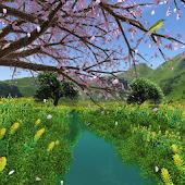 Stream Sakura