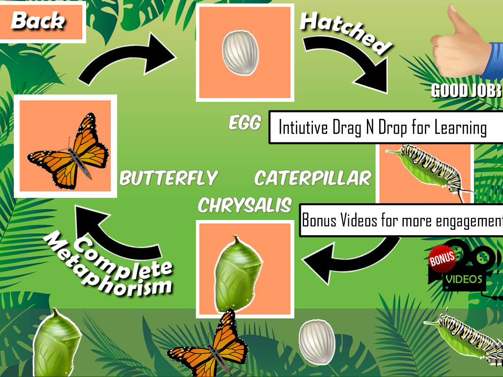 insects life cycle free android apps on google play