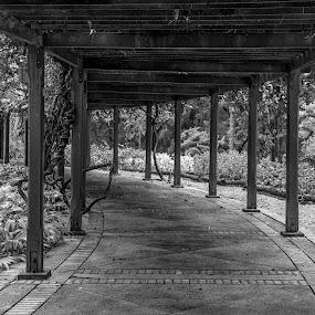 Walk path by Bernice Then - Black & White Street & Candid