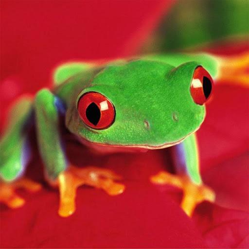 Frogs Jigsaw Puzzles for PC