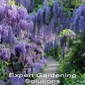 Expert Gardening Solutions