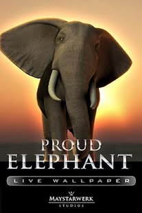 大象現場壁紙