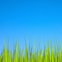 Grass LWP [Revamped] icon