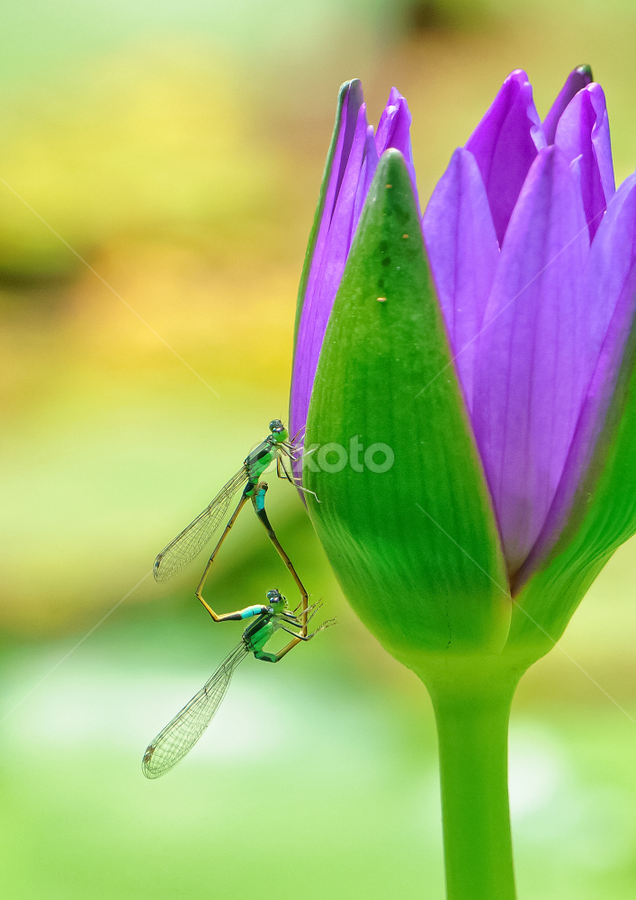 Loving by Thảo Nguyễn Đắc - Animals Insects & Spiders
