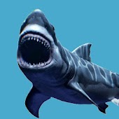 Shark  Jaws Attack Game