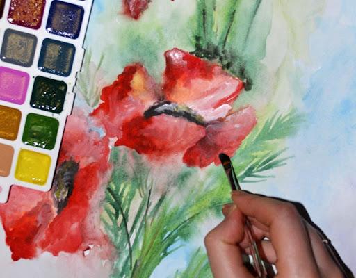 Poppies. Flower watercolor
