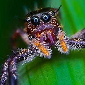 I AM BEAUTIFUL by Ahmad Zaini - Animals Insects & Spiders ( macro nature,  )