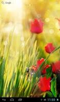 Screenshot of Sunny tulips