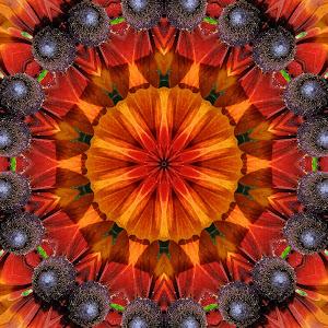 Colorful daisys.jpg