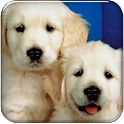 Puppy Go launcher theme logo