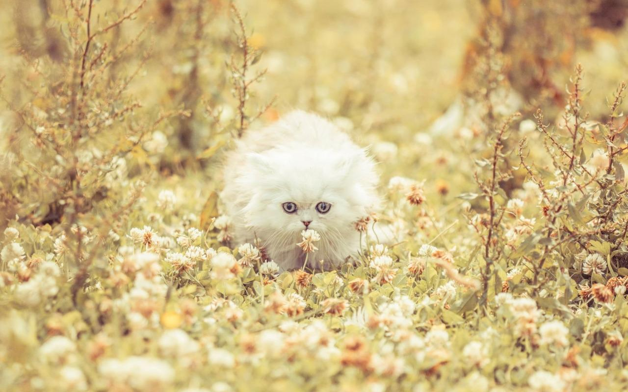 baby cat live wallpaper so many cute animals live wallpapers design by