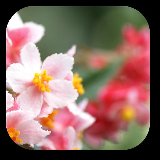 zz[Unpublish]Flower Puzzle LOGO-APP點子