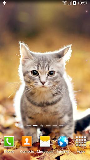 Cat Live Wallpaper 1.0.8 screenshots 1