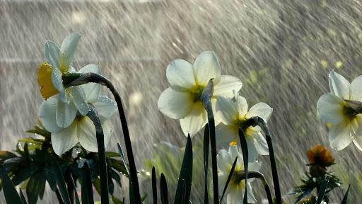 Rain HD Live Wallpaper