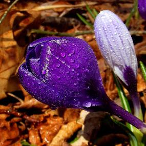 by John Geddes - Flowers Flowers in the Wild