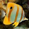 Fish of the Coral Reef 1 FREE icon