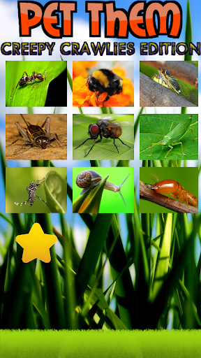 寵物:昆蟲版