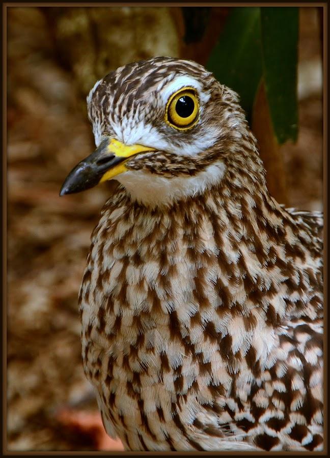 Giving me the eye! by Celia Watkins - Animals Birds