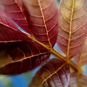 by Karen Buttery - Nature Up Close Leaves & Grasses