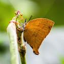 Yamfly Butterfly