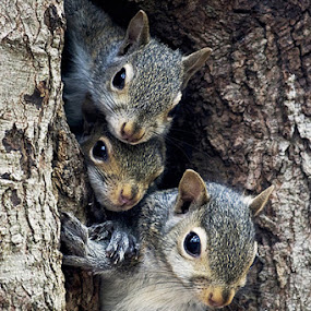 The Squirrels Family Tree  by George Holt - Uncategorized All Uncategorized ( squirrels, tree, three, cute, family tree, squirrel )