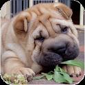 Shar Pei Puppy logo