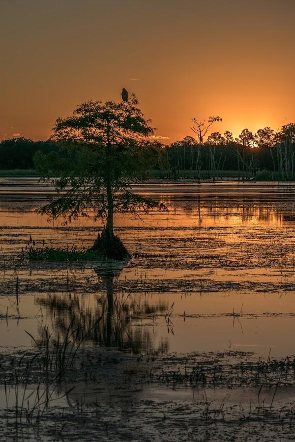 Sunrise Orlando Wetlands by Keith Ellington - Landscapes Sunsets & Sunrises ( trees, sunrise )