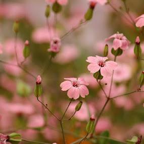 In born wild by Debapriya Bhattacharya - Flowers Flowers in the Wild