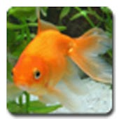 aniPet Goldfish Live Wallpaper