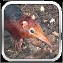 Endangered Animal Species icon