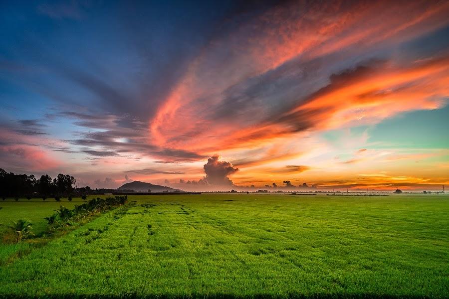 Sunrise on rice fields by Tuoc Nguyen - Landscapes Sunsets & Sunrises