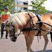 Horse-drawn Vehicle Puzzle Icon