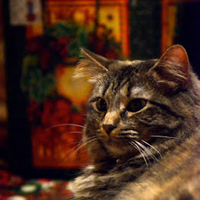 by Missy Roberts - Animals - Cats Portraits