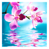 Orchids In Water IV