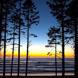 Ruby Beach Trees 4.jpg