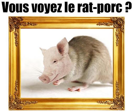 Ratporc