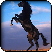 Arabian Horse Wallpapers