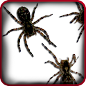 Spider Live Wallpaper icon