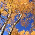 Autumn around me