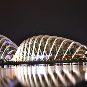 Gardens by the Bay  by Abdul Salim - Buildings & Architecture Architectural Detail (  )