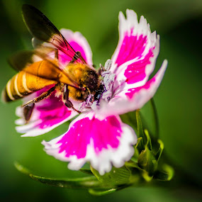 Bee and flower by Dilip Ghosh - Nature Up Close Gardens & Produce